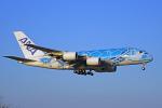 ちゃぽんさんが、成田国際空港で撮影した全日空 A380-841の航空フォト(飛行機 写真・画像)