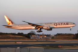 さくらの城南山。さんが、成田国際空港で撮影したカタール航空 777-3DZ/ERの航空フォト(飛行機 写真・画像)