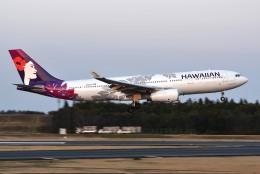さくらの城南山。さんが、成田国際空港で撮影したハワイアン航空 A330-243の航空フォト(飛行機 写真・画像)