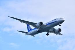 KAGURA-747さんが、羽田空港で撮影した全日空 787-8 Dreamlinerの航空フォト(飛行機 写真・画像)
