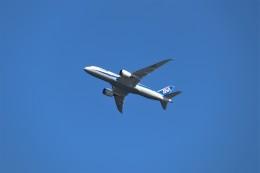 やまそらさんが、羽田空港で撮影した全日空 787-8 Dreamlinerの航空フォト(飛行機 写真・画像)