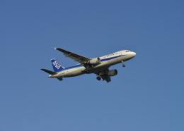 銀苺さんが、羽田空港で撮影した全日空 A320-211の航空フォト(飛行機 写真・画像)