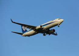 銀苺さんが、羽田空港で撮影した全日空 737-881の航空フォト(飛行機 写真・画像)