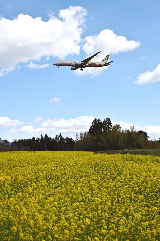 sonnyさんのエティハド航空 Boeing 787-9 (A6-BLT) 航空フォト