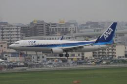 TAK_HND_NRTさんが、福岡空港で撮影した全日空 737-881の航空フォト(飛行機 写真・画像)
