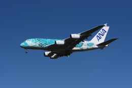 23Skylineさんが、成田国際空港で撮影した全日空 A380-841の航空フォト(飛行機 写真・画像)