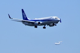 飛行機ゆうちゃんさんが、羽田空港で撮影した全日空 737-881の航空フォト(飛行機 写真・画像)