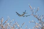 チャッピー・シミズさんが、成田国際空港で撮影したキャセイパシフィック航空 747-467F/ER/SCDの航空フォト(飛行機 写真・画像)