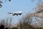 まいけるさんが、成田国際空港で撮影した全日空 777-381/ERの航空フォト(飛行機 写真・画像)