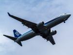 名無しの権兵衛さんが、羽田空港で撮影した全日空 737-881の航空フォト(飛行機 写真・画像)