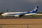 キイロイトリさんが、伊丹空港で撮影した全日空 737-881の航空フォト(飛行機 写真・画像)