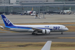 TAK_HND_NRTさんが、羽田空港で撮影した全日空 787-8 Dreamlinerの航空フォト(飛行機 写真・画像)