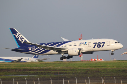 やまけんさんが、羽田空港で撮影した全日空 787-8 Dreamlinerの航空フォト(飛行機 写真・画像)