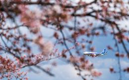 ひげじいさんが、庄内空港で撮影した全日空 737-8ALの航空フォト(飛行機 写真・画像)
