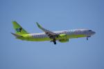 JA8037さんが、成田国際空港で撮影したジンエアー 737-8SHの航空フォト(飛行機 写真・画像)