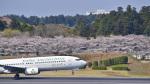 パンダさんが、成田国際空港で撮影した春秋航空日本 737-86Nの航空フォト(飛行機 写真・画像)