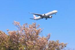 Dazhongさんが、羽田空港で撮影した日本航空 777-346/ERの航空フォト(飛行機 写真・画像)
