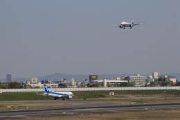 キイロイトリさんが、伊丹空港で撮影した全日空 A320-271Nの航空フォト(飛行機 写真・画像)