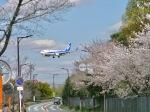 monjiro22001さんが、伊丹空港で撮影した全日空 737-781の航空フォト(飛行機 写真・画像)