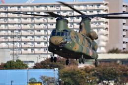 RyuRyu1212さんが、立川飛行場で撮影した陸上自衛隊 CH-47Jの航空フォト(飛行機 写真・画像)
