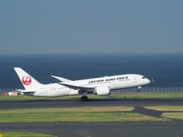 鷹71さんが、羽田空港で撮影した日本航空 787-8 Dreamlinerの航空フォト(飛行機 写真・画像)