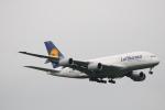 LEGACY-747さんが、成田国際空港で撮影したルフトハンザドイツ航空 A380-841の航空フォト(飛行機 写真・画像)