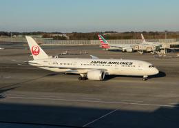 銀苺さんが、成田国際空港で撮影した日本航空 787-8 Dreamlinerの航空フォト(飛行機 写真・画像)