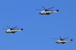 szkkjさんが、木更津飛行場で撮影した陸上自衛隊 EC225LP Super Puma Mk2+の航空フォト(飛行機 写真・画像)