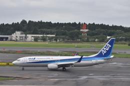 ずっきーさんが、成田国際空港で撮影した全日空 737-881の航空フォト(飛行機 写真・画像)