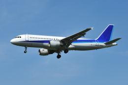 ポン太さんが、成田国際空港で撮影した全日空 A320-211の航空フォト(飛行機 写真・画像)