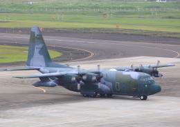 タミーさんが、仙台空港で撮影した航空自衛隊 C-130H Herculesの航空フォト(飛行機 写真・画像)