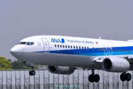キットカットさんが、伊丹空港で撮影した全日空 737-881の航空フォト(飛行機 写真・画像)