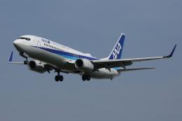 徳兵衛さんが、伊丹空港で撮影した全日空 737-881の航空フォト(飛行機 写真・画像)