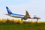杉の裏さんが、成田国際空港で撮影した全日空 787-8 Dreamlinerの航空フォト(飛行機 写真・画像)
