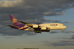 LEGACY-747さんが、成田国際空港で撮影したタイ国際航空 A380-841の航空フォト(飛行機 写真・画像)