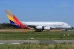 メンチカツさんが、成田国際空港で撮影したアシアナ航空 A380-841の航空フォト(飛行機 写真・画像)