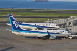 Rsaさんが、羽田空港で撮影した全日空 737-881の航空フォト(飛行機 写真・画像)