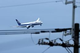 T.Sazenさんが、伊丹空港で撮影した全日空 787-9の航空フォト(飛行機 写真・画像)