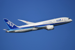 NANASE UNITED®さんが、羽田空港で撮影した全日空 787-8 Dreamlinerの航空フォト(飛行機 写真・画像)