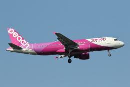 安芸あすかさんが、成田国際空港で撮影したピーチ A320-214の航空フォト(飛行機 写真・画像)