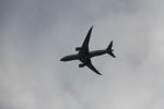 Hide0404さんが、羽田空港で撮影した日本航空 787-8 Dreamlinerの航空フォト(飛行機 写真・画像)