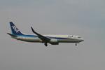 matsuさんが、成田国際空港で撮影した全日空 737-881の航空フォト(写真)