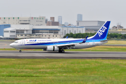@たかひろさんが、伊丹空港で撮影した全日空 737-8ALの航空フォト(飛行機 写真・画像)