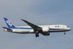 安芸あすかさんが、成田国際空港で撮影した全日空 787-8 Dreamlinerの航空フォト(飛行機 写真・画像)