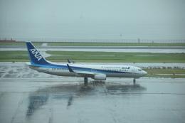 セッキーさんが、羽田空港で撮影した全日空 737-881の航空フォト(飛行機 写真・画像)