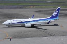 しゃこ隊さんが、羽田空港で撮影した全日空 737-881の航空フォト(飛行機 写真・画像)