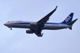 TOPAZ102さんが、伊丹空港で撮影した全日空 737-8ALの航空フォト(飛行機 写真・画像)