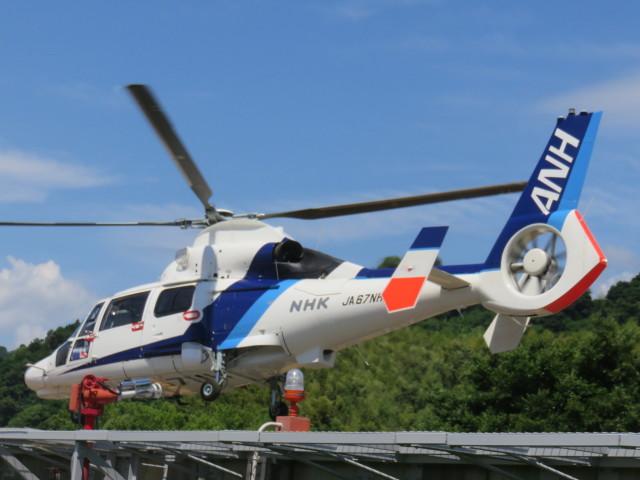 ランチパッドさんが、静岡ヘリポートで撮影したオールニッポンヘリコプター AS365N3 Dauphin 2の航空フォト(飛行機 写真・画像)