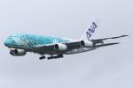 kinsanさんが、成田国際空港で撮影した全日空 A380-841の航空フォト(飛行機 写真・画像)