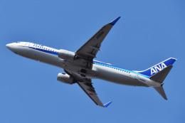 森の妖精さんが、函館空港で撮影した全日空 737-881の航空フォト(飛行機 写真・画像)